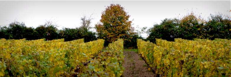 chateau-fontenay-loire-vin-terroir-vignes_1
